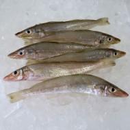 Other Fresh Fish image