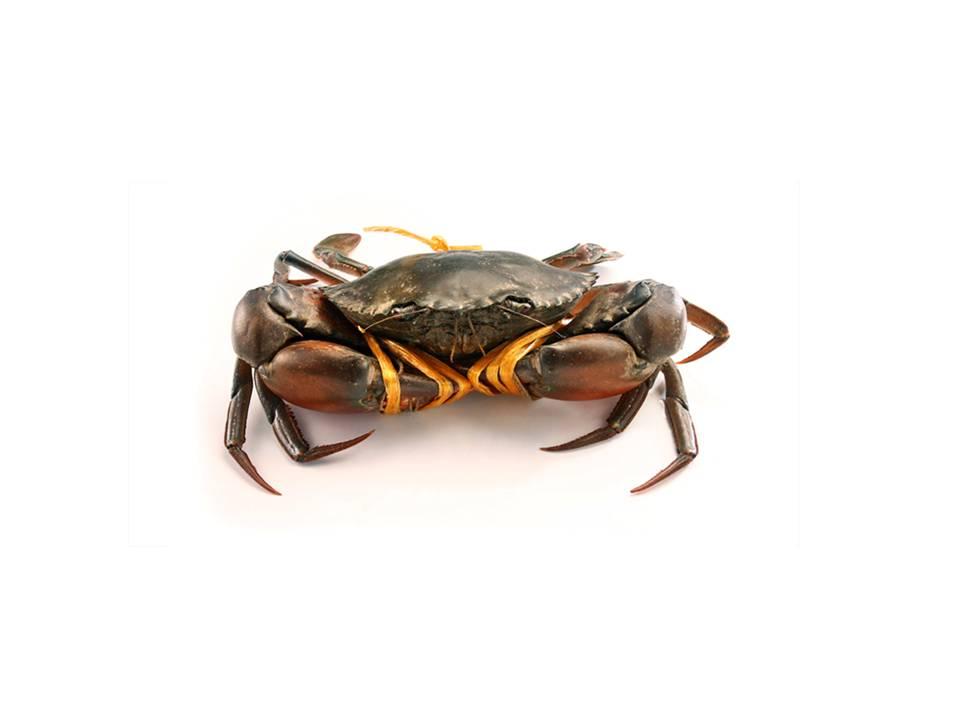 Crabs image