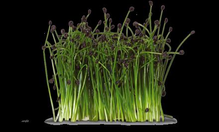 Premium Imported Vegetables image