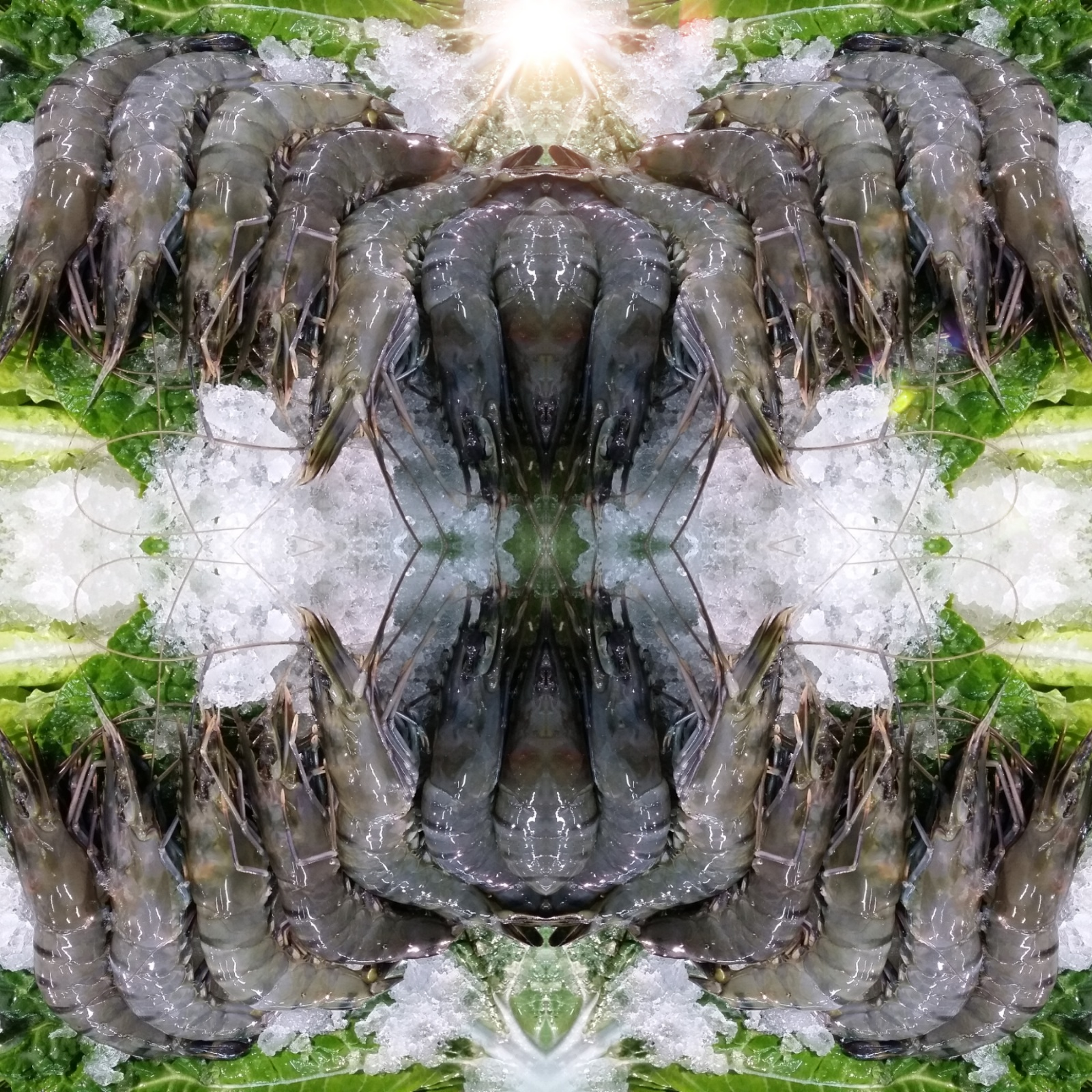 Tiger Prawn image