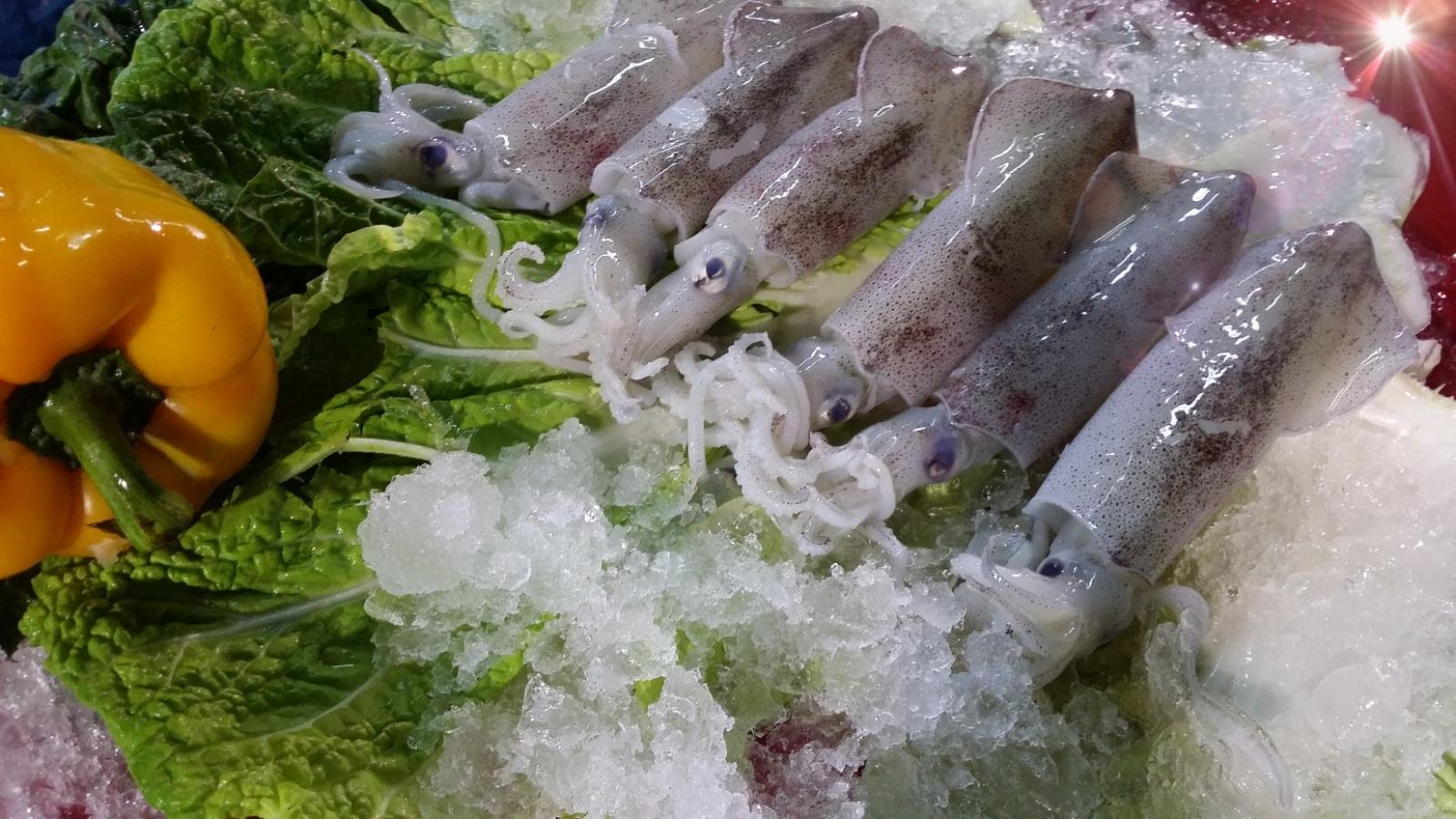 Squid & Cuttlefish image