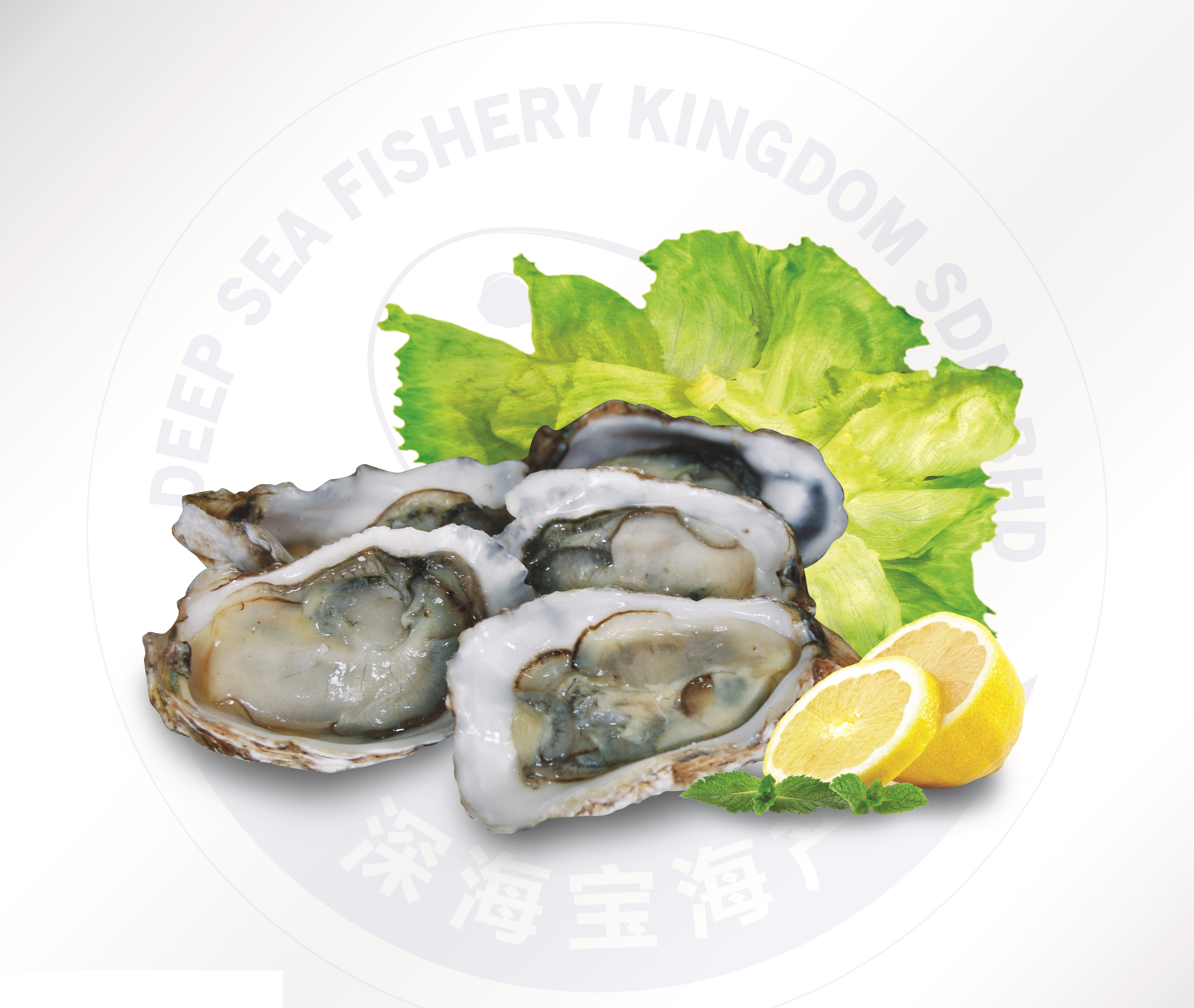 Oysters image
