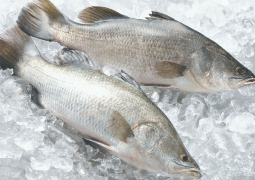Frozen Fish image