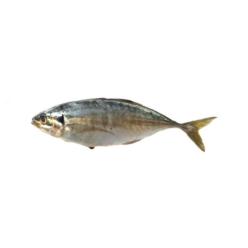 Fresh Fish image
